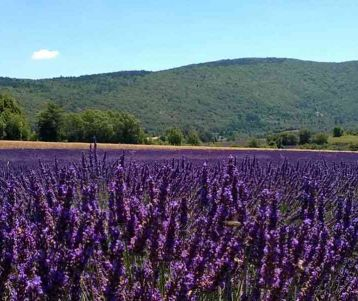 bike-tour-in-lavender-in-the-heart-of-provence