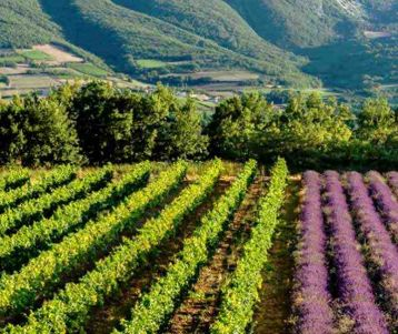 beautiful-luberon-with-vineyards-and-lavender