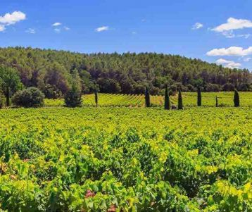 cycling-trip-vineyard-wine-session-wine-road-foot-mont-ventoux-gigondas-chateauneuf-du-pape