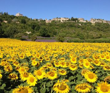 A walk through Van Gogh's Provence: in Luxury