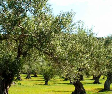 olive tours in provence