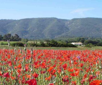 easy-cycle-day-luberon-provence-poppies-vineyards-seldom-used-road-provence-heart-perched-villages