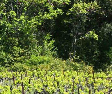 bicycle-tour-in-the-vineyards-and-olive-groves-provence