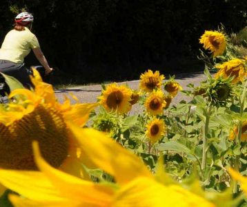 biking-adventure-in-the-sunflower-and-along-the-wines-beautiful-countryside-road-bike-easy-ride-provence
