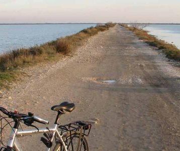 bike-tour-on-the-wall-sea-by-the-med-sea-easy-cycling-flat-provence-wild-horses-birds-bulls