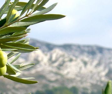alpilles mountains guided walking holiday in provence