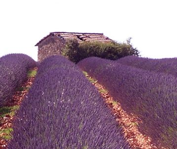 Walking Guided - Provence Lavender tour