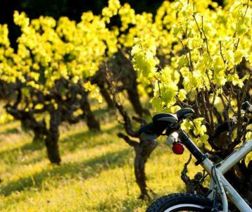 Cycling in the Provence vineyards, Ventoux and the Luberon