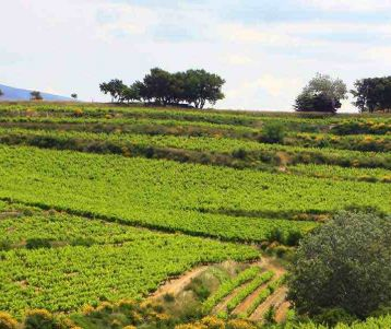 bike-tour-mont-ventoux-luberon-vineyard-wine-road-bike-provence
