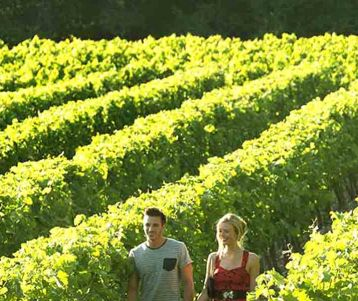 PRIVATE GUIDED DAY TRIP - Moderate - Gigondas & vineyards