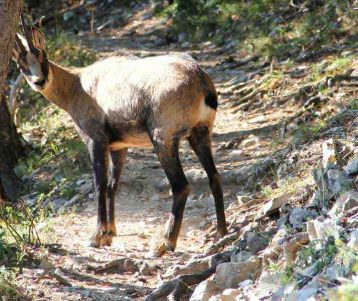 wild-animals-provence