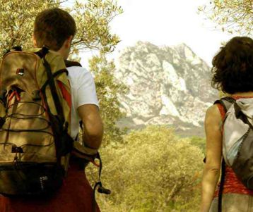 guided-hiking-walking-holiday-olive-groves-easy-provence-van-gogh-alpilles