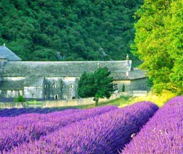 guided-trip-for-walking-walkers-in-the-lavender-field-of-provence-senanque-abbey-next-gordes-in-provence