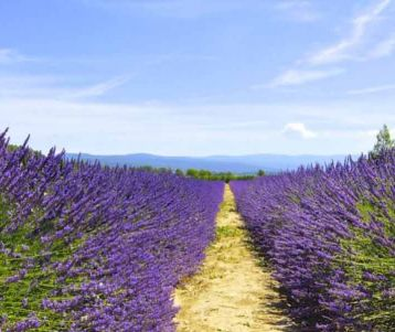 Self drive : Ventoux, Spa and lavender fields of Provence