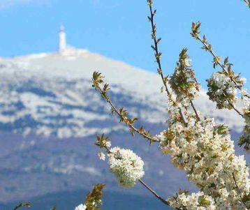 bicycle-tour-discover-the-wine-rhone-valley-provence-cherry-in-blossom
