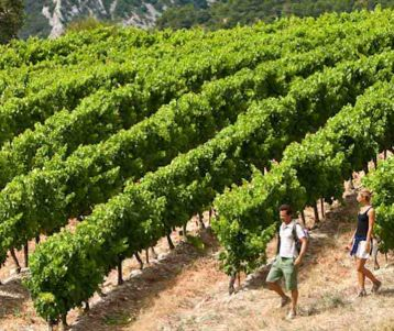 walking-vineyards-gigonas-cotes-du-rhone-wines