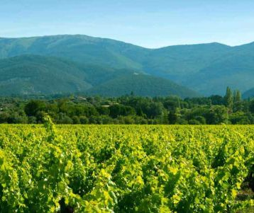 cycle-trip-in-famous-luberon-vineyards-lavender-olive-groves-provence