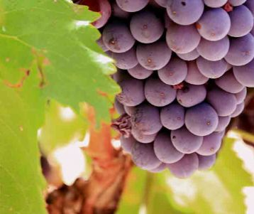 provence wine tours