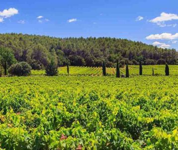 Walking in Provence vineyards of Chateauneuf du Pape