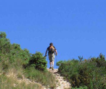 walking-in-van-gogh-saint-remy
