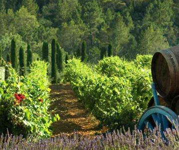 walking-from-one-wine-estate-to-one-wine-estate-in-chateauneuf-du-pape-provence