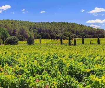 guided-walk-wine-tour-in-the-vineyards-of-chateauneuf-pape-great-walks-in-the-trails-vineyard-provences