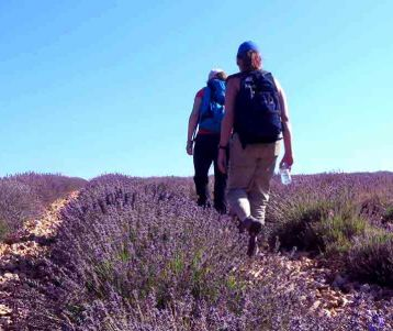 walking in lavender fields provence
