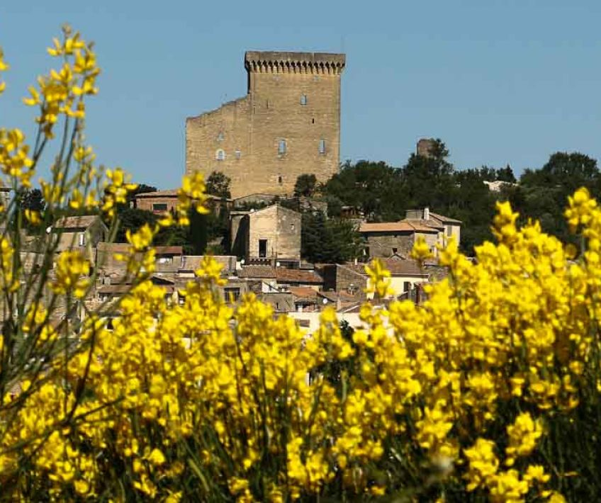 chateauneuf du pape and its vineyard in provence