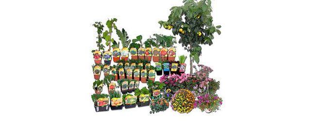 production et vente de plantes, arbres, arbustes, ...