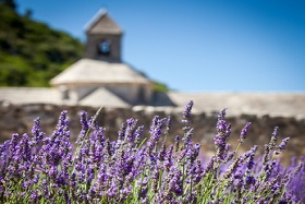 senanque abbey and lavender