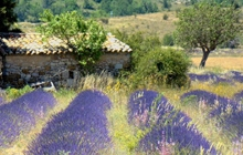 lavander wine walking hiking provence paris cote d azur river cruise