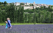 walking in lavender fields in Provence in Sault