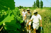 walking in the famous vineyards of chateauneuf du pape with an expert great wine tasting