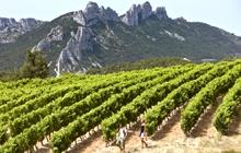 rando vignes cotes du rhone provence
