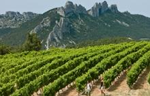 walk in the vineyards of gigondas vacqueyras at the foot of the dentelles famous cotes du rhones