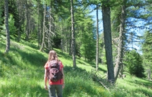 walking at the foot of the mont ventoux in pine forest & oak