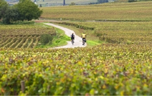 cycling in chateauneuf du pape vineyards wine