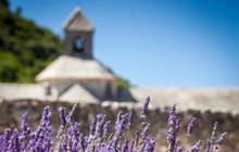 Senanque abbey lavender fields Luberon