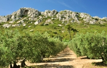 easy cycling in van gogh alpilles to saint remy de provence in olive groves and beautiful montagnette