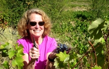 vines, grapes, Provence