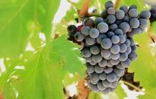 degustation vin cotes du rhone provence randonnee avec guide rando velo